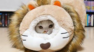 マンチカンズライオンの体内に入るニャンコ~catsinsidealion~