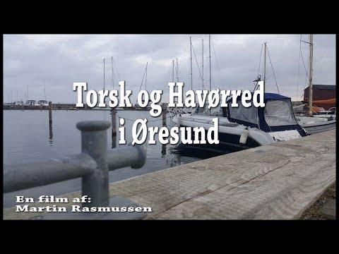Trolling efter torsk og havørred på Øresund ved Skovshoved