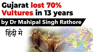 Gujarat lost 70% vultures in 13 Years, Why population of avian scavengers is declining rapidly?