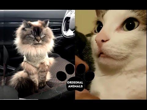 Original Animals #24. CUTE AND FUNNY ANIMALS VIDEO/ МИЛЫЕ И СМЕШНЫЕ ЖИВОТНЫЕ.