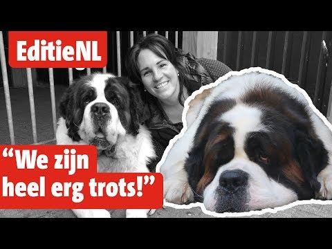 Balou is de Mooiste Hond van Nederland - EDITIE NL