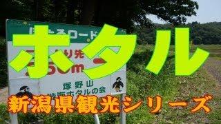 新潟県観光シリーズほたるの里へ行って来ました。新潟県長岡市越路Townoffirefly