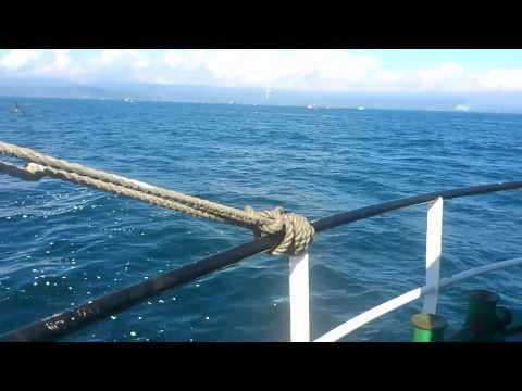 Capello pesca pelagica golfo de arauco