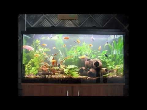 Creative Diy aquarium decorating ideas