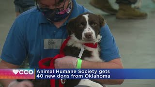 Animal Humane Society Gets 40 New Dogs From Oklahoma