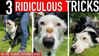 Methods to Prepare three RIDICULOUS Canine Tips FAST!