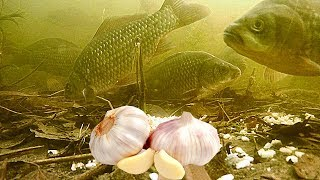 Приманка для рыбы с феромонами способ разведения
