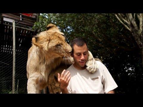 הלוחש לאריות הישראלי