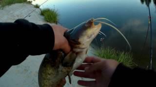 Ловля сома весной на реке десна