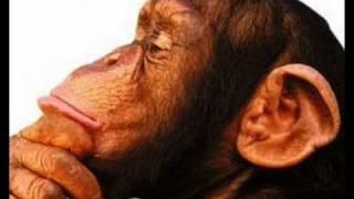 Titãs - Homem Primata