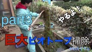 巨大流木ビオトープ3