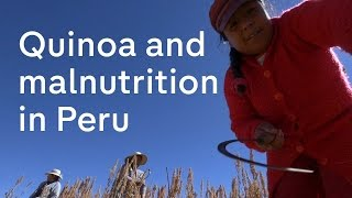 Quinoa And Its Consequences: Malnutrition In Peru