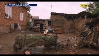 На Тернопільщині вода знищила городи та тварин