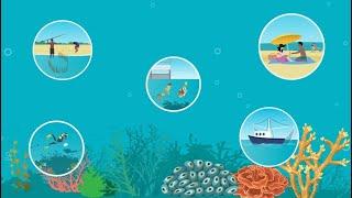 Great Barrier Reef Outlook Report explainer