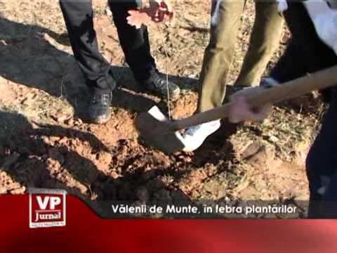 Vălenii de Munte, în febra plantărilor