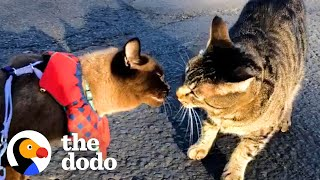 Cat Meets New Boyfriend On A Walk But Is Skeptical About Him At First, Until... | The Dodo Cat Crazy