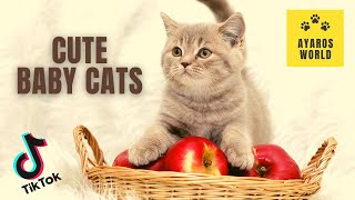 Cute and funny baby cat videos -Tik Tok #75