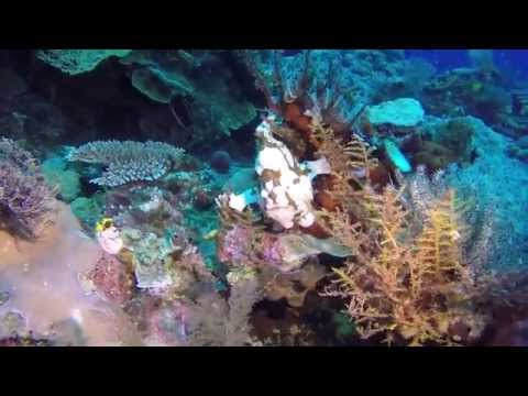 Wakatobi Dive Resort 03/2014