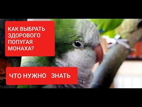 Helminták fajok listája