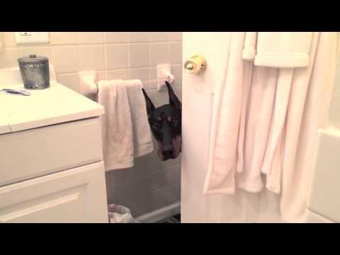 Zulu the Bathroom Spy