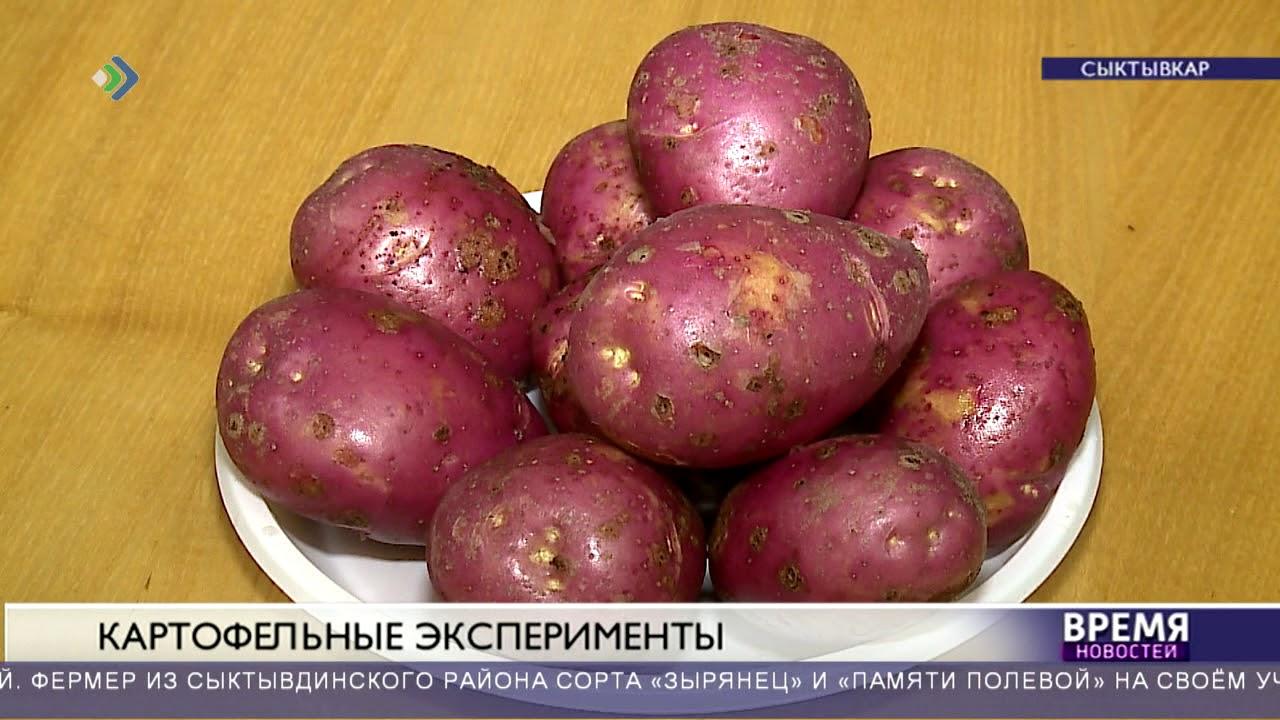 Сколько картофеля собрали в Коми?