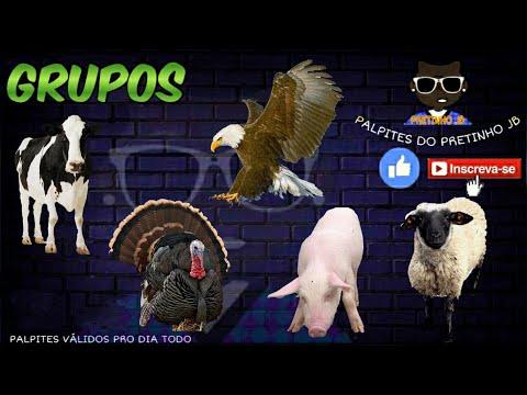 PALPITES JOGO DO BICHO 07/09/2020 RJ, LOOK, LOTEP, NACIONAL, FEDERAL, L-BR, BAHIA,LOTERIA DOS SONHOS