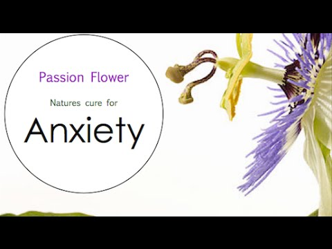 Video Passion Flower benefits for Anxiety - Herbal Medicine