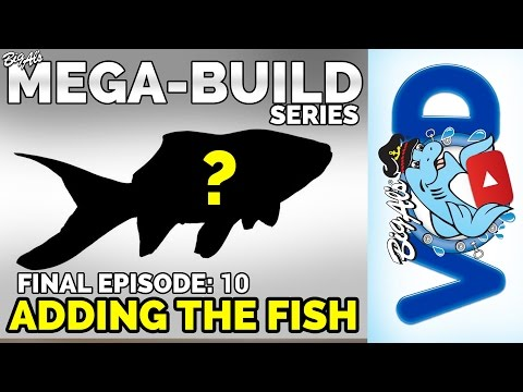 Mega-Build Series Ep 10 FINALE – Adding The Fish (Video)
