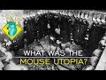 TLDR  What Was the Mouse Utopia