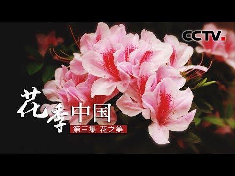, title : '《花季中国》花之美 | CCTV纪录