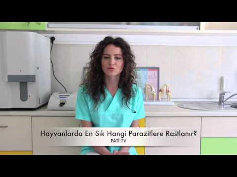 Papilloma virus vescicale sintomi