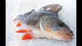 Балансиры для зимней рыбалки куусамо