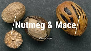 🔵 All About Nutmeg & Mace