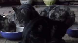 Katze Mimi - Mahlzeit Jürgen's und Ursula's Gartenblick
