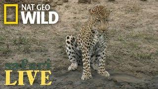 Safari Live - Day 106 | Nat Geo Wild