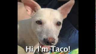 Help Me Get My Rescue Dog TACO from Mexico to the USA