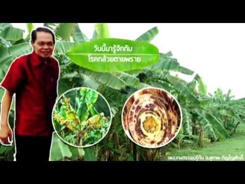 Giardia และ Pinworms
