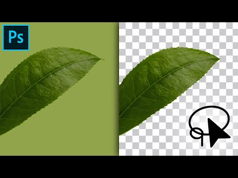 How To Use The Lasso Tool To Cut Out Images In Photoshop