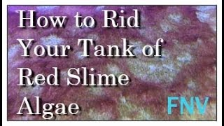 How to get rid of red slime algae in your reef tank