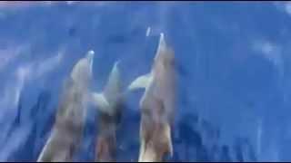 Yunus balıkları mutlaka izle  sea hog