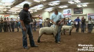Sheep Judging (7/19/14)