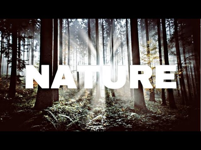 Instrumen Musik Alam Hutan (Backsound Suara)