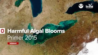 Harmful Algal Blooms Primer 2015