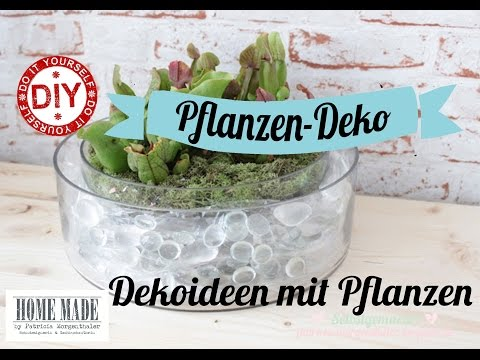 How To I  Deko-Ideen mit Pflanzen I Deko Inspirationen Selbstgemacht