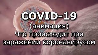 COVID-19 Анимация - Что происходит при заражении коронавирусом