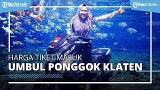Informasi Harga Tiket Masuk dan Tarif Foto Underwater di Umbul Ponggok Klaten Terbaru