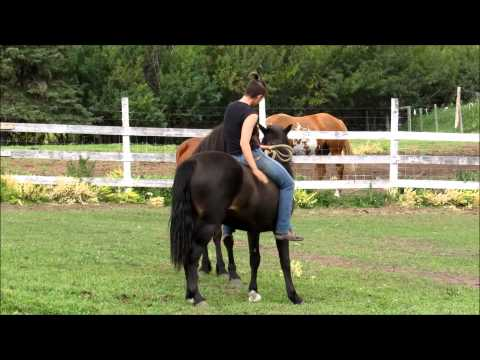 Woman rides tiny pony - Youtube Download