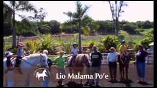 Therapeutic Horsemanship Hawaii Kona Programs
