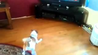 Куче бяга от телевизор - Смях!!!