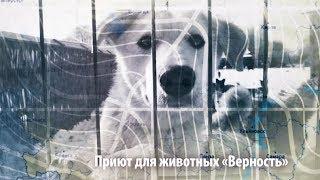 Экс-сварщик с приютом для собак   ЧЕЛОВЕК НА КАРТЕ